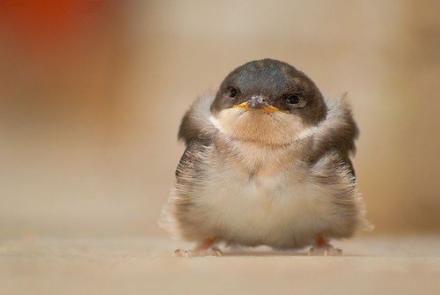 lil bird.jpg